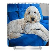 Lounging Goldendoodle  Shower Curtain