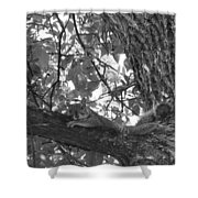 Lounging Squirrel Shower Curtain