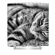 Lounging Time Shower Curtain