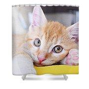 Lovable Cat Shower Curtain
