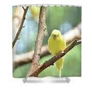 Lovable Little Budgie Parakeet Living In Nature Shower Curtain