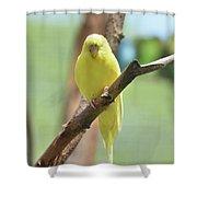 Lovable Yellow Budgie Parakeet Bird Up Close Shower Curtain