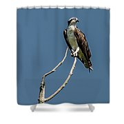 Love Call Shower Curtain