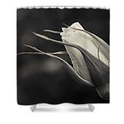 Love Has Gone Shower Curtain