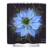 Love In A Mist Black With Light Shower Curtain