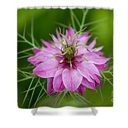 Love In The Mist Shower Curtain