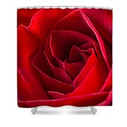 Love Is A Red Rose Shower Curtain