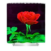 Love Is A Rose Shower Curtain