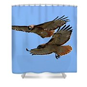 Courtship Love Is In The Air Shower Curtain