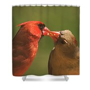 Love Is In The Air Cardinals Square Shower Curtain