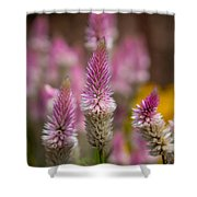 Love Lavender.... Shower Curtain
