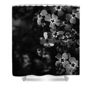 Love Lost Shower Curtain by Laurie Search
