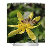 Tasting Marsh Marigold  Shower Curtain