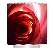 Love Me Tender As The Petals Of This Rose Shower Curtain