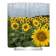 Love My Sunflowers Shower Curtain