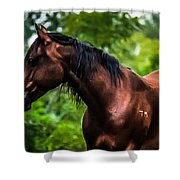 Love Of Horses Shower Curtain