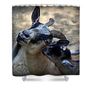 Love On A Farm Shower Curtain by Karen Wiles