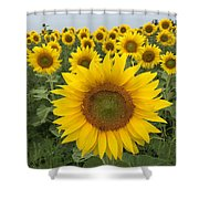 Love Sunflowers Shower Curtain