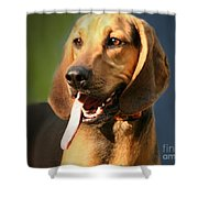 Loveable Hound Shower Curtain