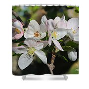 Lovely Apple Blossoms Shower Curtain