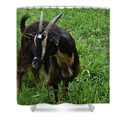 Lovely Billy Goat With Silky Black And Brown Fur Shower Curtain