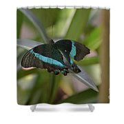 Lovely Blue And Black Emerald Swallowtail Buterfly Shower Curtain