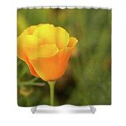 Lovely Buttercup Flower. Shower Curtain