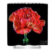 Lovely Carnation 12718-1 Shower Curtain