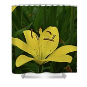 Lovely Close Up Of A Yellow Lily In Full Bloom Shower Curtain