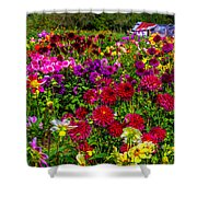 Lovely Dahlia Garden Shower Curtain