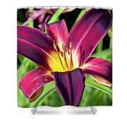 Lovely Day Lily Shower Curtain