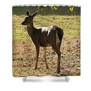 Lovely Deer Shower Curtain