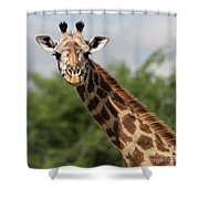 Lovely Giraffe In Tarangire - Square Format Shower Curtain