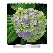 Lovely Hydrangea Shower Curtain