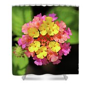 Lovely Lantana Shower Curtain