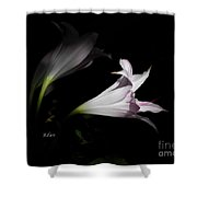 Lovely Lilies Dreams To Light Shower Curtain