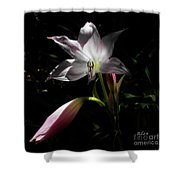 Lovely Lilies Partners Shower Curtain