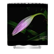 Lovely Lilies Sleeping Bloom Shower Curtain