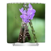 Lovely Moth On Dainty Flower Shower Curtain