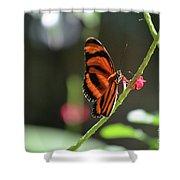 Lovely Orange Oak Tiger In The Spring Shower Curtain