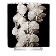 Lovely Orchid Cluster Shower Curtain