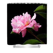 Lovely Pink Camelia Shower Curtain