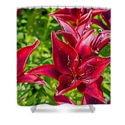 Lovely Red Lilies Shower Curtain