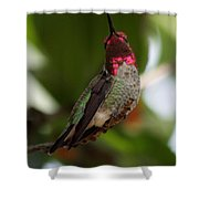 Lovely Ruby Red Shower Curtain