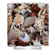 Lovely Seashells Shower Curtain