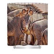 Lovely Stripes  7589 Shower Curtain