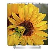 Lovely Sunflowers Shower Curtain