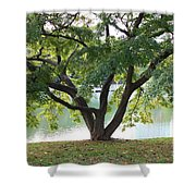 Lovely Tokyo Tree With Pond Shower Curtain