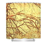 Lovely Twists In Nature Shower Curtain