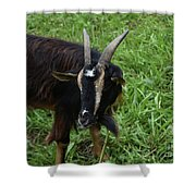 Lovely Up Close Look Into The Face Of A Pygmy Goat Shower Curtain